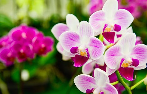 Photograph of white orchids