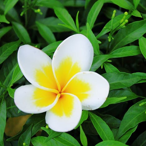 A sprouting flower with bright, colorful petals