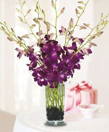 Simply Chic Orchids