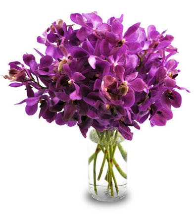 Vibrant purple orchids in a clear glass vase.