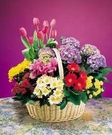 Big City Garden Basket - Al's Florist