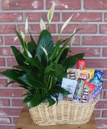 Peace lily plant arranged in a basket accompanied by snacks & goodies.