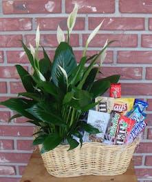 Plant & Snack Basket