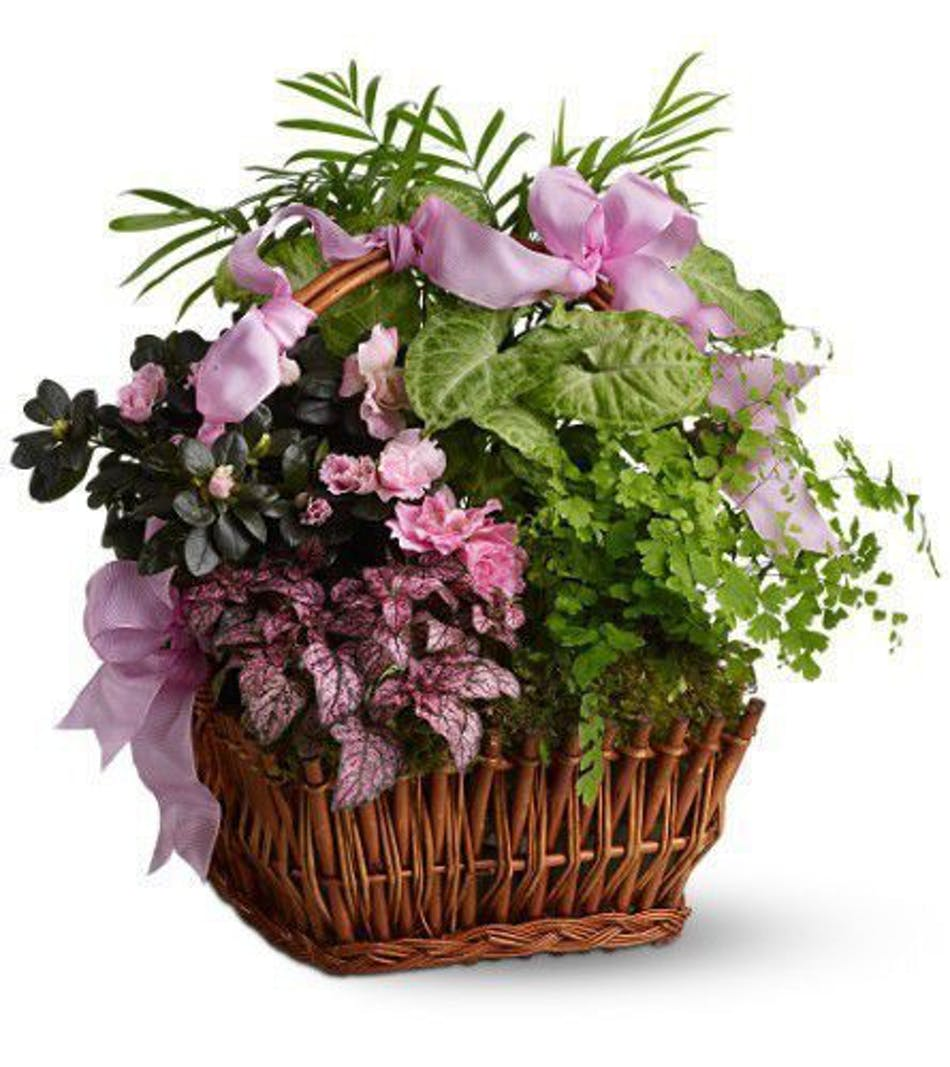 Pink azalea and greenery with other potted plants inside a woven handbasket with pink ribbon.