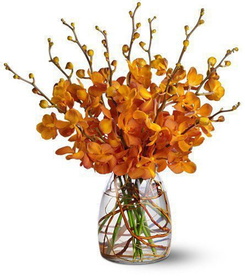 Orchid Embers Hollywood (FL) Flower Delivery by Al's Florist