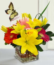 Vibrant Butterfly A Wonderful Just Becasue Bouquet