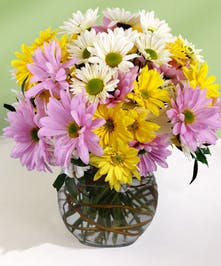 Purple, yellow and white daisies in a glass bowl vase.