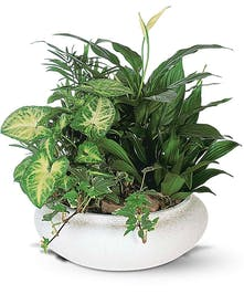 Assorted green plants potted together in a ceramic dish.