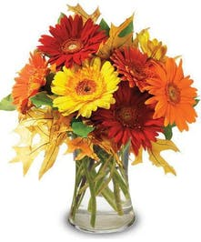 Autumn/Fall Daisies Hollywood (FL) Flower Delivery by Al's Florist