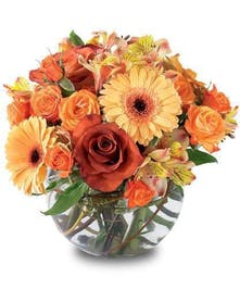 Autumn Elegance Hollywood (FL) Flower Delivery by Al's Florist