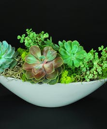Variety of succulents in a ceramic dish.