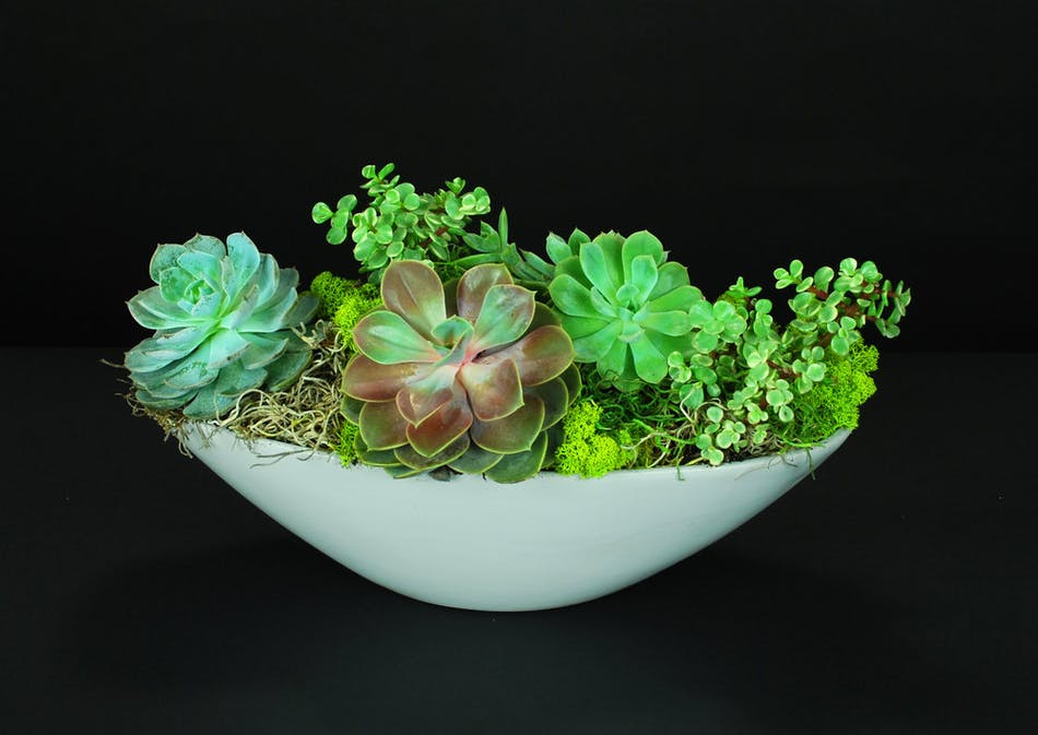 Living garden art created with a variety of these beautiful, versatile . and exotic succulents plants.