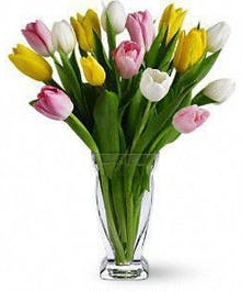 Light pink, white and yellow tulips in a clear glass vase.