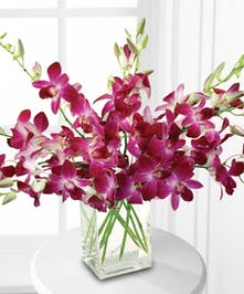 Cut varigated dendrobium orchids with a touch of greenery in a clear glass rectangle vase.