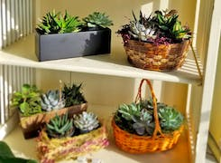 A sunny shelf featuring succulents in a variety of gift basket arrangements